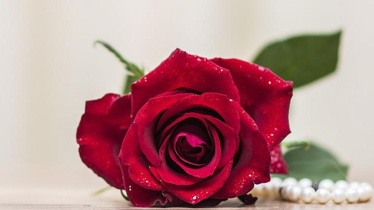 Gift Romance Romantic Love Flower Rose Petal